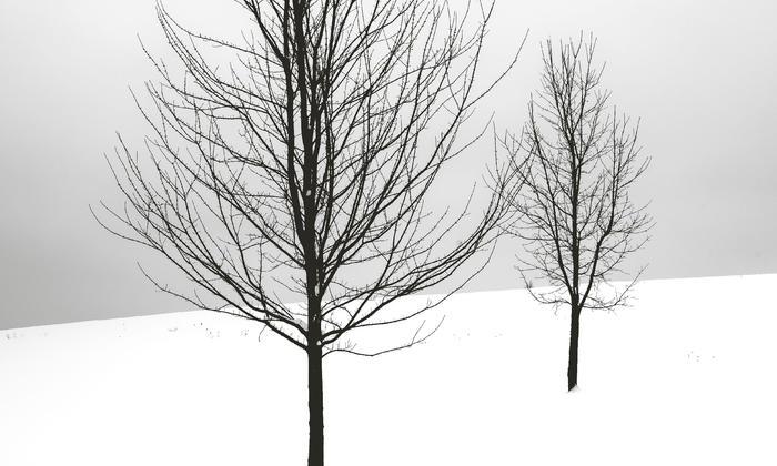Scena muta di Nicoletta Bidoia: una coltre di neve che indurisce e protegge